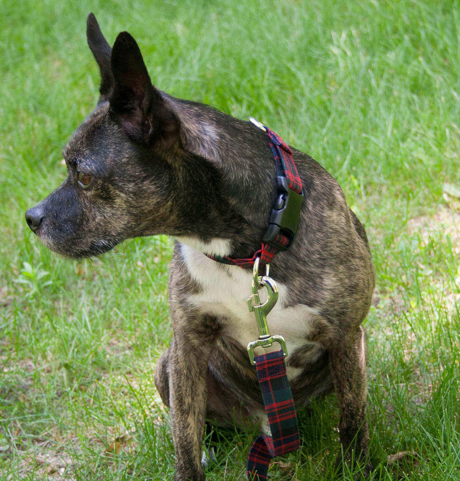 Medium Weight Premium Wool 1-Inch Tartan Dog Collar and Leash Set