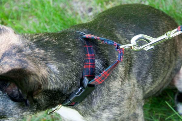 Poly-Viscose 1-Inch Tartan Dog Collar and Leash Set