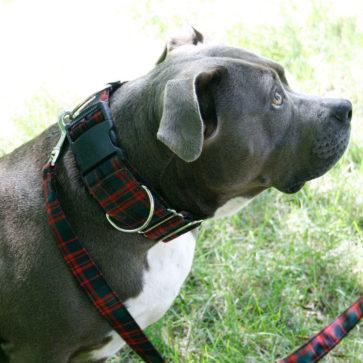 Medium Weight Premium Wool 2-Inch Tartan Dog Collar and Leash Set