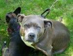 Homespun 2-Inch Tartan Dog Collar and Leash Set