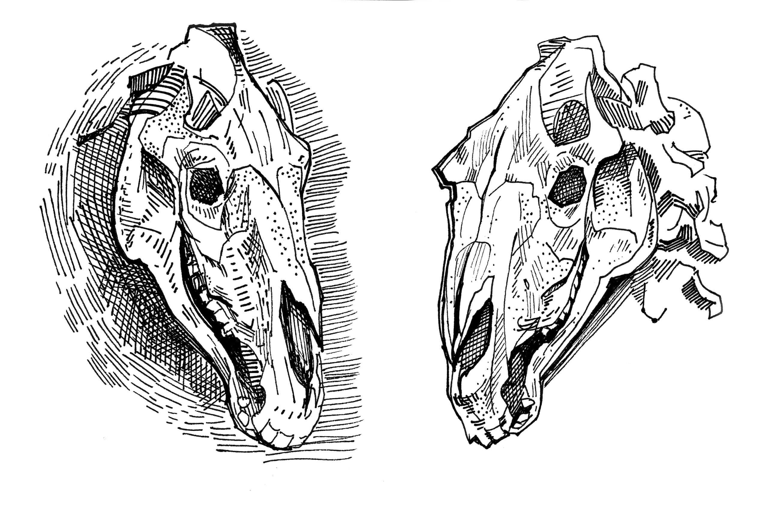 a drawing of a horse skull