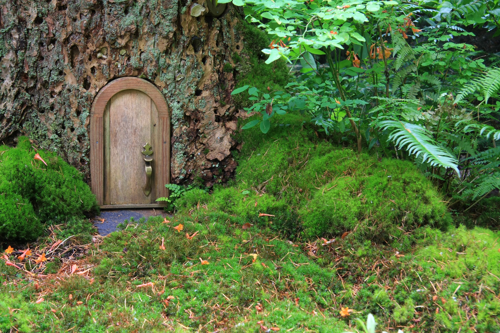 A fairy garden with a small door in a tree to celebrate Beltane.