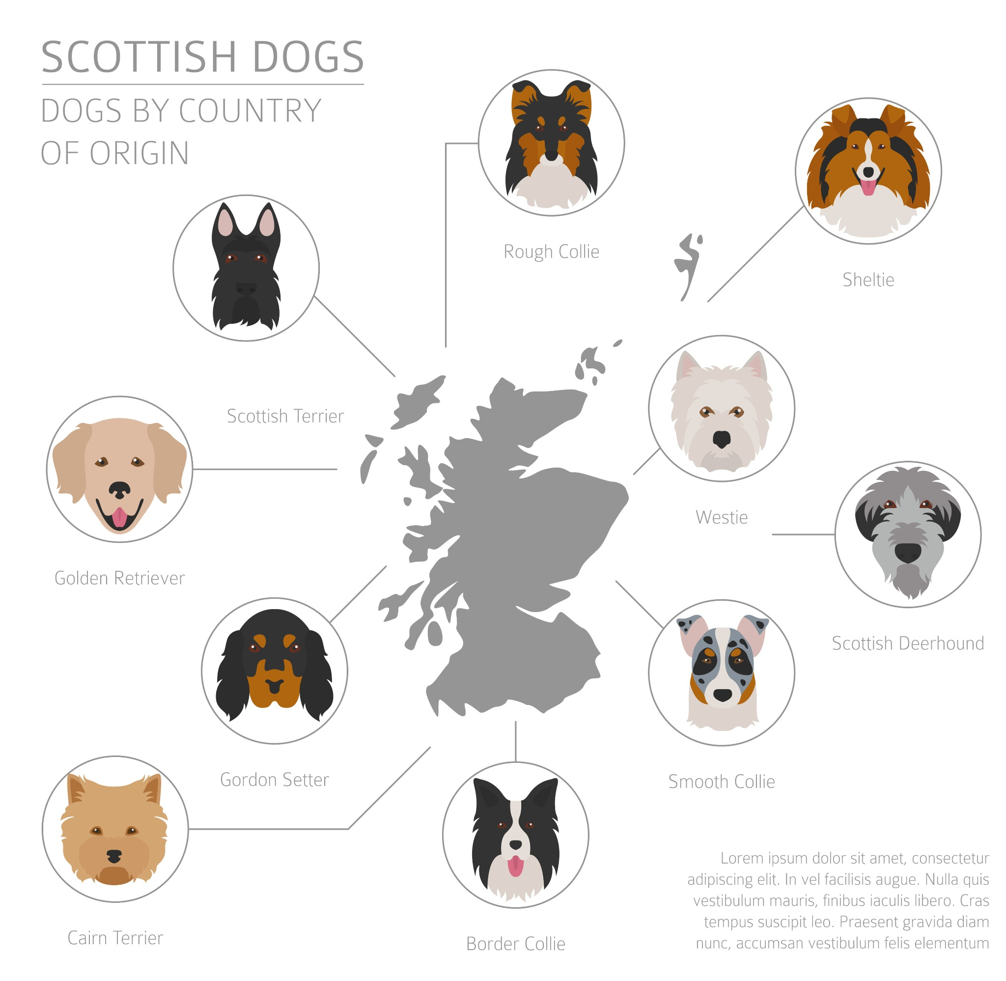 A diagram of the many dog breeds that originated in Scotland.